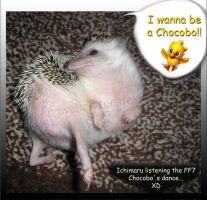 Chocobo Hedgehog XD by IngwellRitter