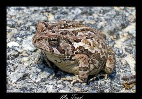 Mr. Toad by AmericanNomad