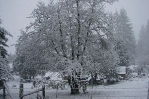 December Snow 2008 12 by Ozzyhelter