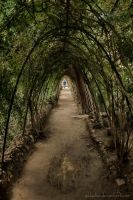 Living tunnel by g4l4d4n
