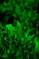 Green Sanctuary II by AnathemicConfusions