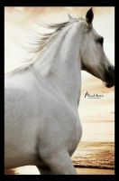 Arabian horse by Ahmed-Matrix
