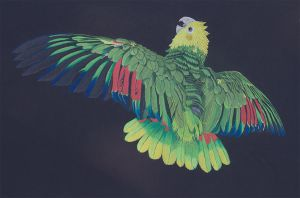Amazon Parrot by DPaZZa