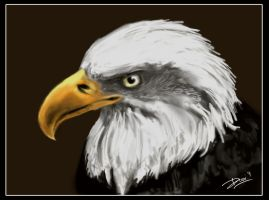 bald eagle by gondz