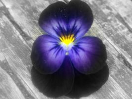 Pansy by mantha1624