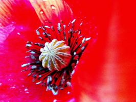 intensely red by nicelandscape