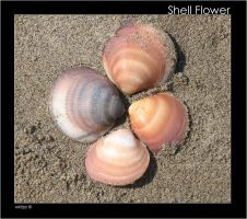 Shell Flower by WKLIZE
