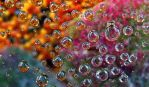 Water drops by annie812