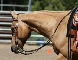 Horse Show Stock 011 by Notorious-Stock