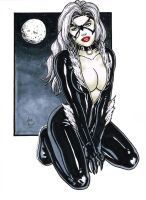 Black Cat 03 by BanebrookStudios