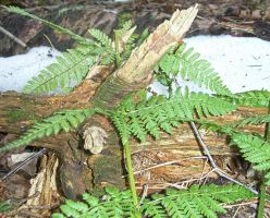 Ferns 02 by Kaito42