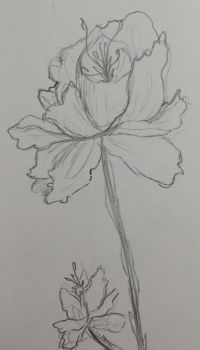 I love sketching out flower so much by Allyplaystrumpet
