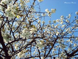 Cherry Tree Blossom 2 by Lady-Deliah