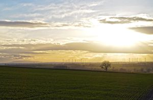 lonely tree panorama by Mynyny