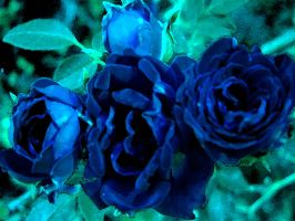 blue roses by Lisa-Gane