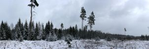 Snowy forest panorama by Gothicpagan