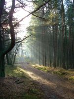 Forest in Poland by thrustumbleine