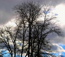 Dark Tree against Sky by wagn18