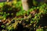 Miniature Forest by kenjisoera