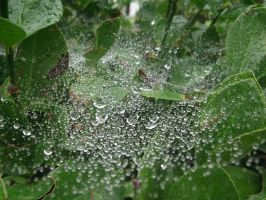 wet spiderweb #2 by rikumario