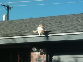 cat on an ice cold roof by Ironhold