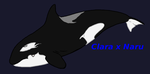 Orca Calfs For Maaliks World By Sapphireblueocean1 by Maaliks-World