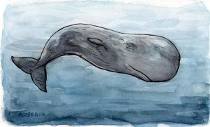 Sperm Whale by angelac