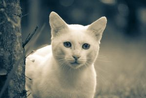 Rediculously Photogenic cat 3 by At0micDrag0n