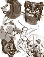 Big Cat Study 2 by LeLittleLuna