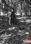 Dryad Grooms Her Tree by madshutterbug