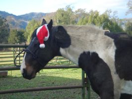 Horse Chirstmas 14 by rachellafranchistock