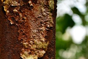 the bubbling rust part 2 by jnicolini12