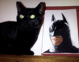 My cat Krimi with our drawing of Batman by JasminaSusak