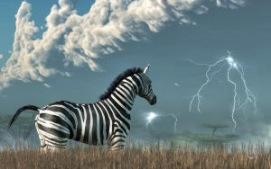 Zebra and Approaching Storm by deskridge