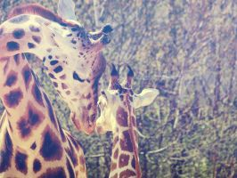 mother love by Clergna
