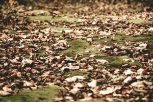 A Carpet of Leaves and Moss by WickedOwl514