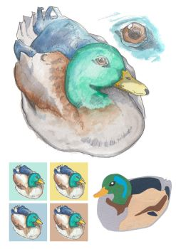 Duck studies by realgumption