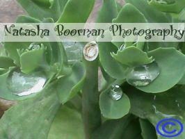 water drops on a plant by tazy01