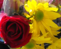 Rose and Yellow Daisies by my-dog-corky
