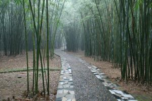 Bamboo by Not4Lovers