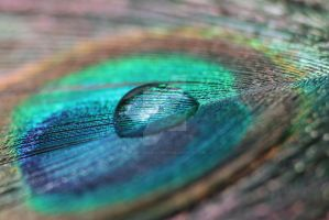 water drop on a feather by Gothic-Enchantress