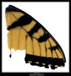 Blurry Butterfly Wing by Angelrat-Stock