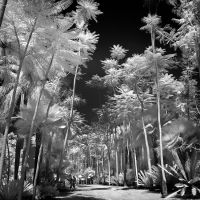 Huge Palm Trees by MichiLauke