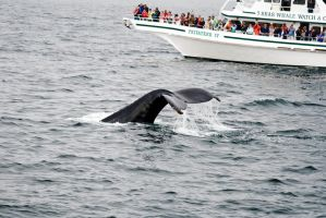 Whale Watch by IV47E