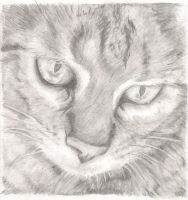 Tabby Cat by RebeccaVose