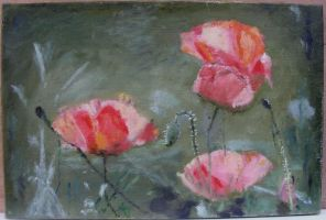 Poppies by Moenn
