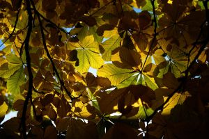 Leaves II by cainadamsson