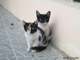 twin cat's by rabie-graphie