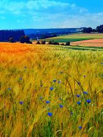 Fields of summer with flowers and scenery by patrickjobst