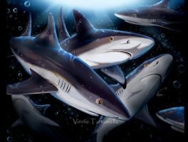 Sharks by VinRoc